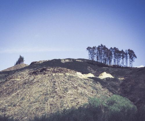 Sam Heydt, Deforestation-NewZealand-2016-